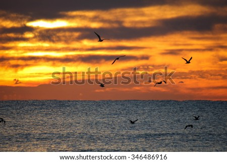 sunrise birds