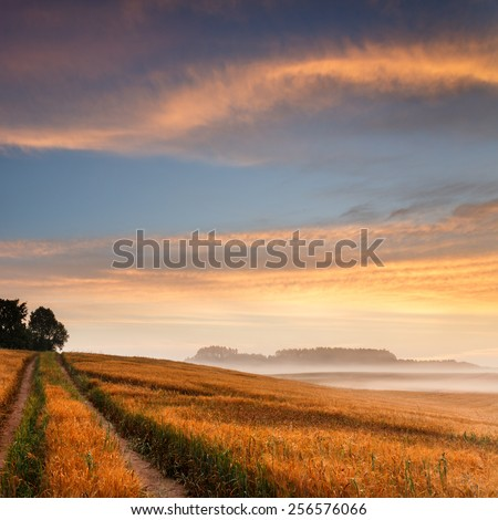 Sunrise field with road in north Poland/ Sunrise field light - stock photo