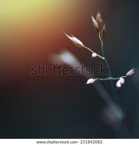 sunrise flowers - stock photo