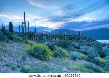 Sunrise gets gently Sonoran Desert to bloom. - stock photo