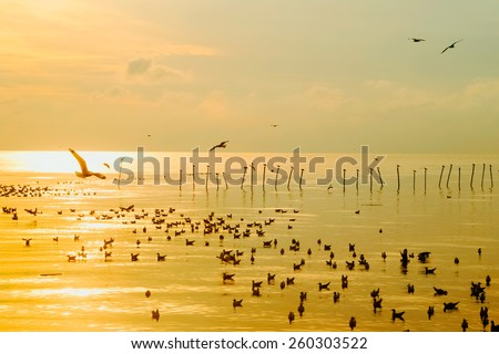 Sunrise golden water and seagull silhouette - stock photo