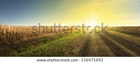 Sunrise, Good Morning Drive - The Sun rising on a South Dakota dirt road.  A corn field ready for harvest on the left.  - stock photo
