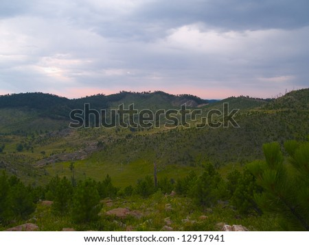 Sunrise image of forest recovering from fire - Custer State Park in the Black Hills of South Dakota. - stock photo