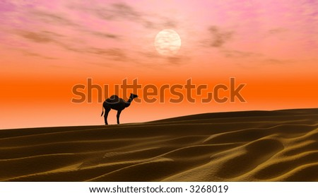 Sunrise in a desert with camel silhouette in the background