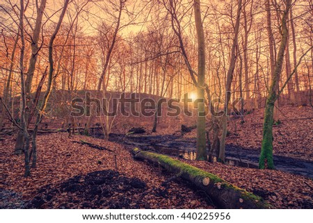 Sunrise in a forest swamp with a log with green moss - stock photo