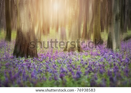 sunrise in a forest with flowers covering the ground - stock photo