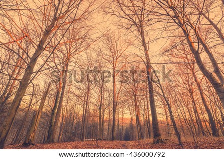 Sunrise in a Scandinavian forest with talle trees - stock photo