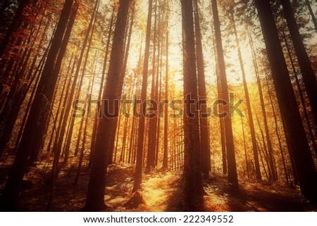 Sunrise in autumn forest. Tilt-shift lens use. - stock photo
