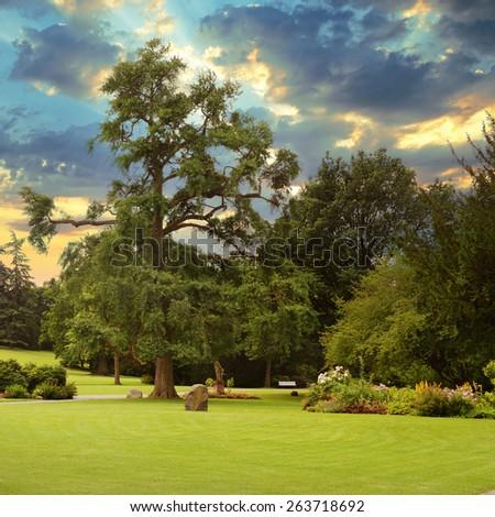 Sunrise in beautiful summer park - stock photo