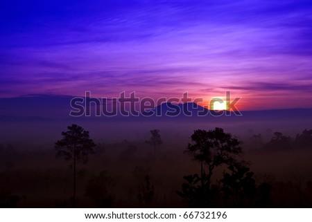 Sunrise in fog's forest - stock photo