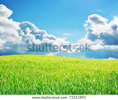 Sunrise in green meadow. Nature composition. - stock photo