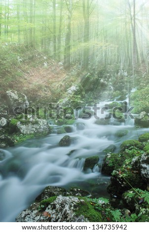 sunrise in rainy forest in spring - stock photo