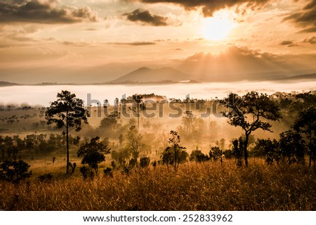 sunrise in savanah meadow, thailand
