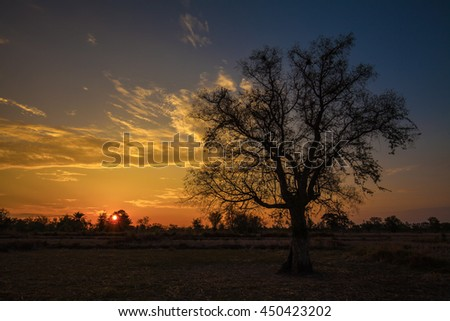 Sunrise in the field and tree for beautiful background.