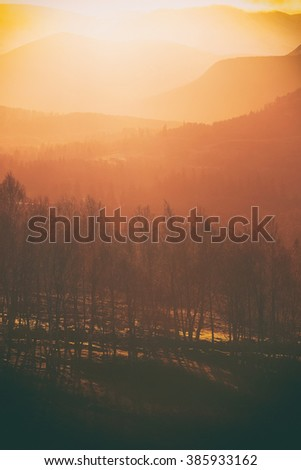 Sunrise in the forest at Lynwilg, Cairngorms in the Scottish Highlands, UK. Added grain and colour styling. - stock photo