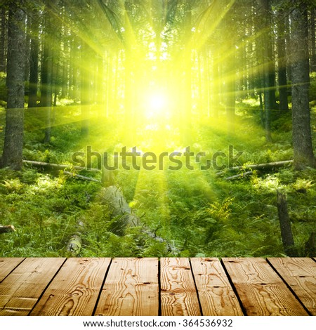 sunrise in the forest background - stock photo