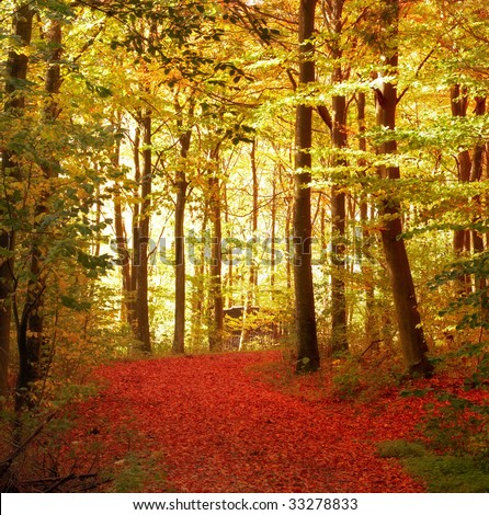 Sunrise in the forest in autumn - stock photo