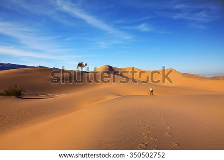 Sunrise in the orange sands of the desert Mesquite Flat, USA. Middle-aged woman - photographer photographs dunes. Camel with harness and blanket for walking tourists