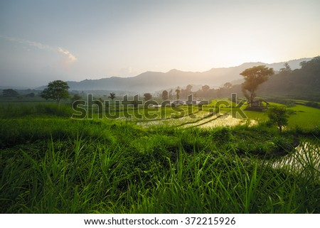 Sunrise in the valley with rice fields and mountains