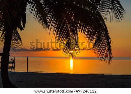 Sunrise on key west with palm tree