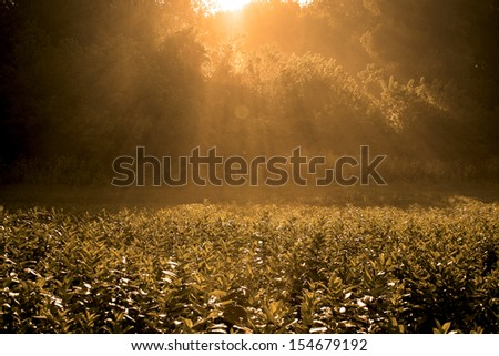 Sunrise on meadow with back light - stock photo