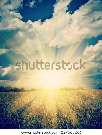 sunrise on the sumerly wheat field instagram stile - stock photo