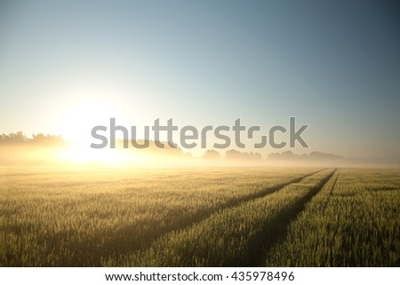 Sunrise over a field. June, Poland.