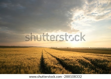 Sunrise over a field of grain. - stock photo