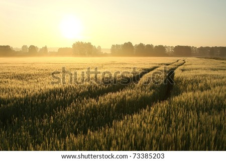 Sunrise over a field of grain on a foggy spring day. - stock photo