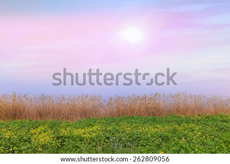 Sunrise over a meadow of the river bank. Landscape background - stock photo