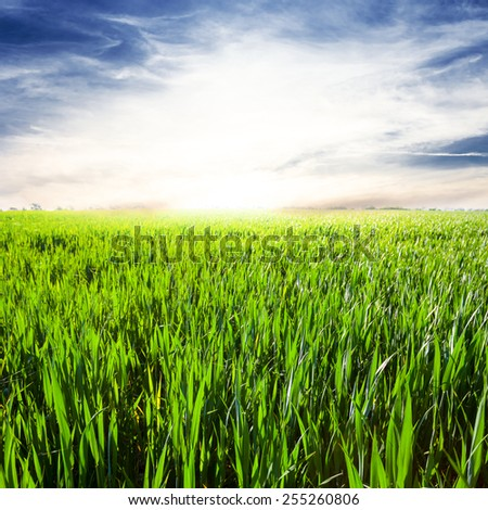 sunrise over a rural fields - stock photo
