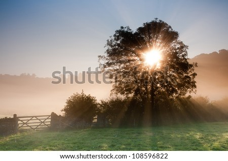 sunrise over foggy meadow - stock photo