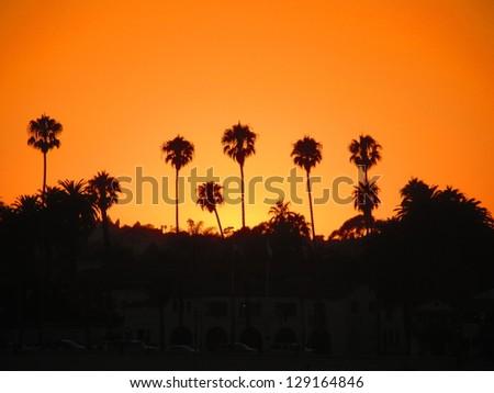 Sunrise over Palms - stock photo