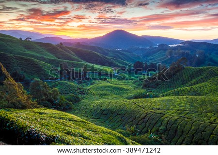 Sunrise over Sungai Palas tea plantation in Cameron Highlands, Pahang, Malaysia. - stock photo