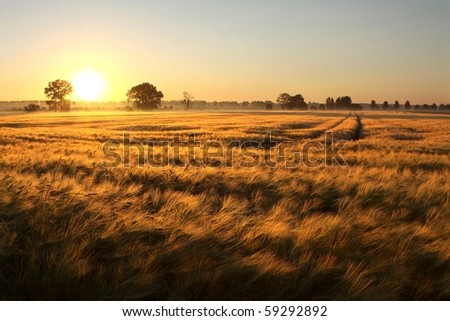 Sunrise over the fields of grain on the first day of summer. - stock photo