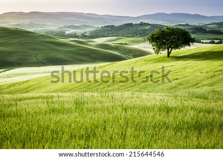 Sunrise over the green fields in Tuscany - stock photo