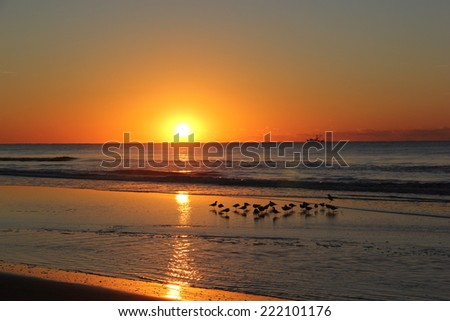 Sunrise over the ocean with sandpipers in the water.