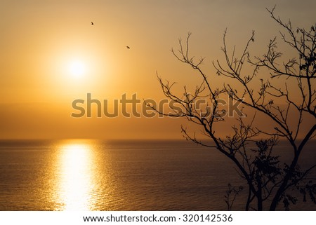 Sunrise over the sea in autumn. In the foreground the branches of a tree, in the background the sun and the silhouettes of birds. - stock photo