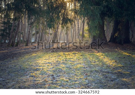 Sunrise through foliage, frosty autumn morning background - stock photo