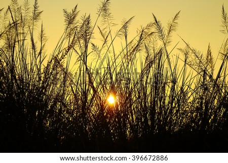 Sunrise with a silhouette of grass . - stock photo
