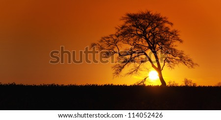 Sunrise with lone tree over rape fields