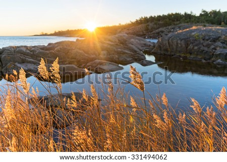 Sunrise with warm yellow sea grass at the coastline, Sweden - stock photo