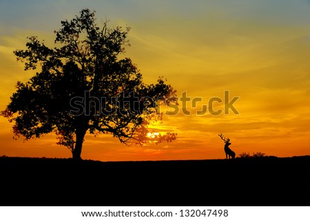 sunset against three and deer silhouette