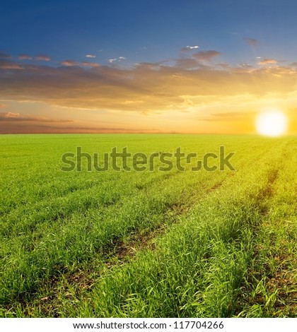 sunset among a fields