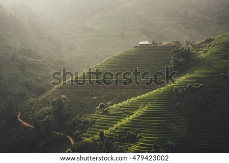 Sunset and Agriculture Green Rice fields and rice terraced on mountain at SAPA, Lao Cai, Mu Cang Chai, Vietnam. The most of area is rice terraced. nature and landscape rice fields