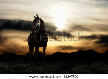 Sunset and balck horse