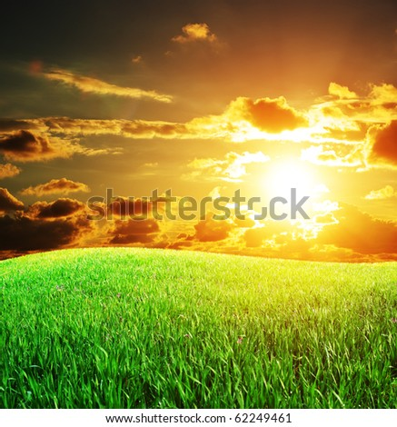 Sunset and big green meadow. Nature composition.