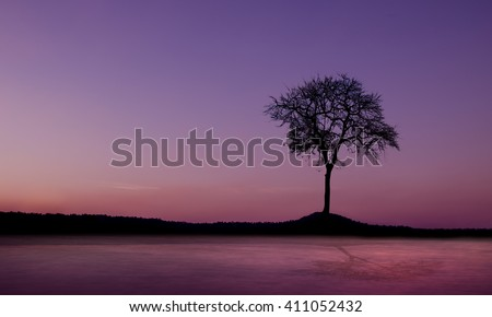 Sunset and dead tree mountain - stock photo