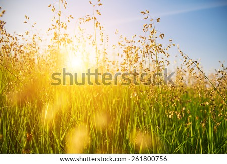 sunset and grass - stock photo