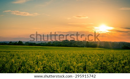 Sunset and idyllic country landscape with field of yellow rapeseed